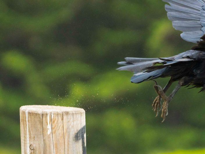 Raven Exit